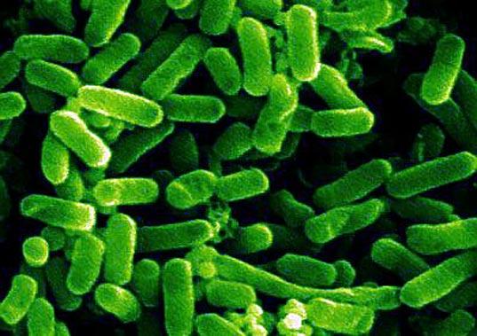 e.coli-ed01